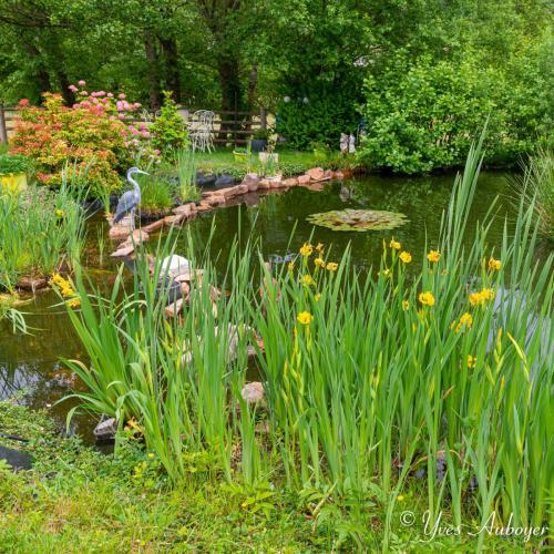 L'étang et ses jolies fleurs